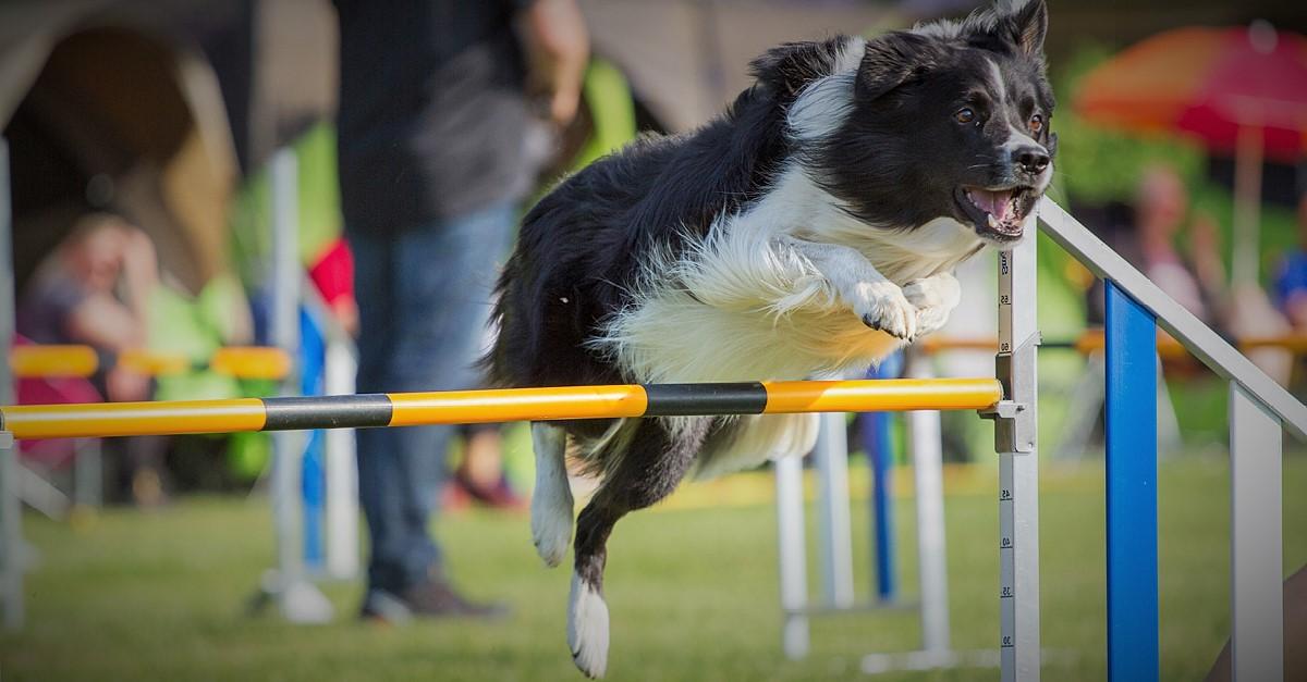 Mentaltraining im Hundesport